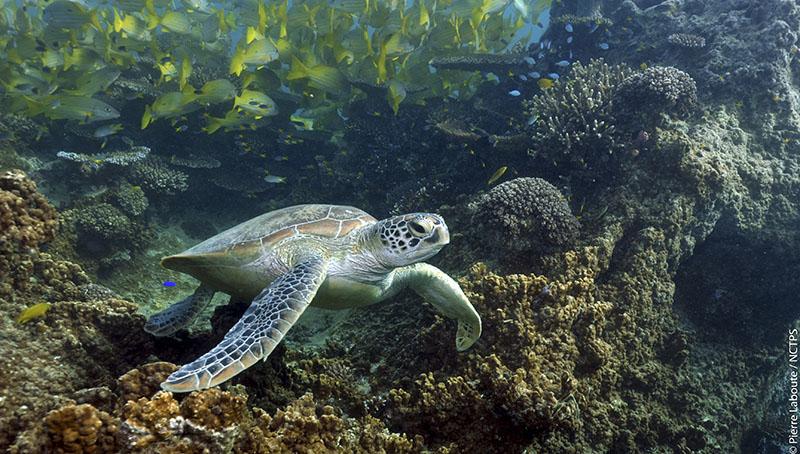 Les fonds marins en Nouvelle-Calédonie