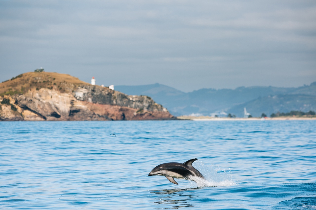 Nager avec les dauphins en Nouvelle-Zélande
