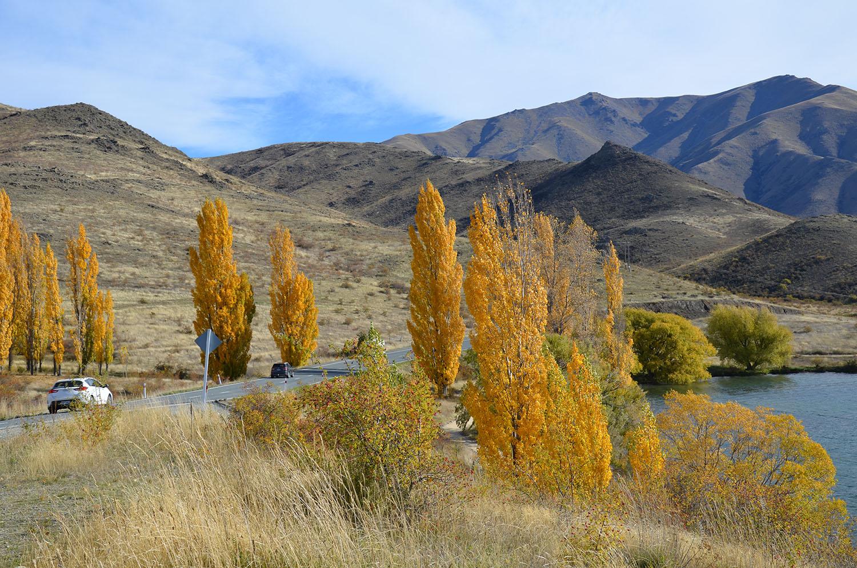 Les magnifiques couleurs de l'automne dans la région Mackenzie en Nouvelle-Zélande