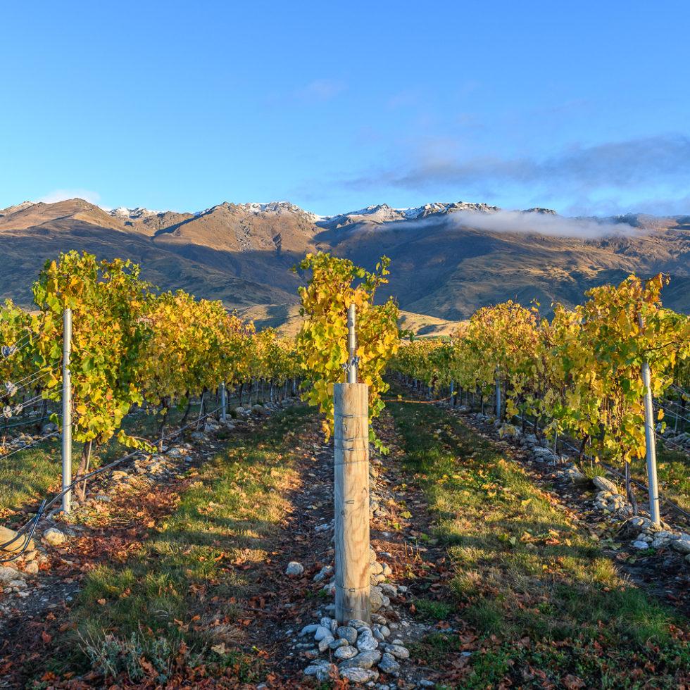 Vignobles dans le Central Otago, Nouvelle-Zélande
